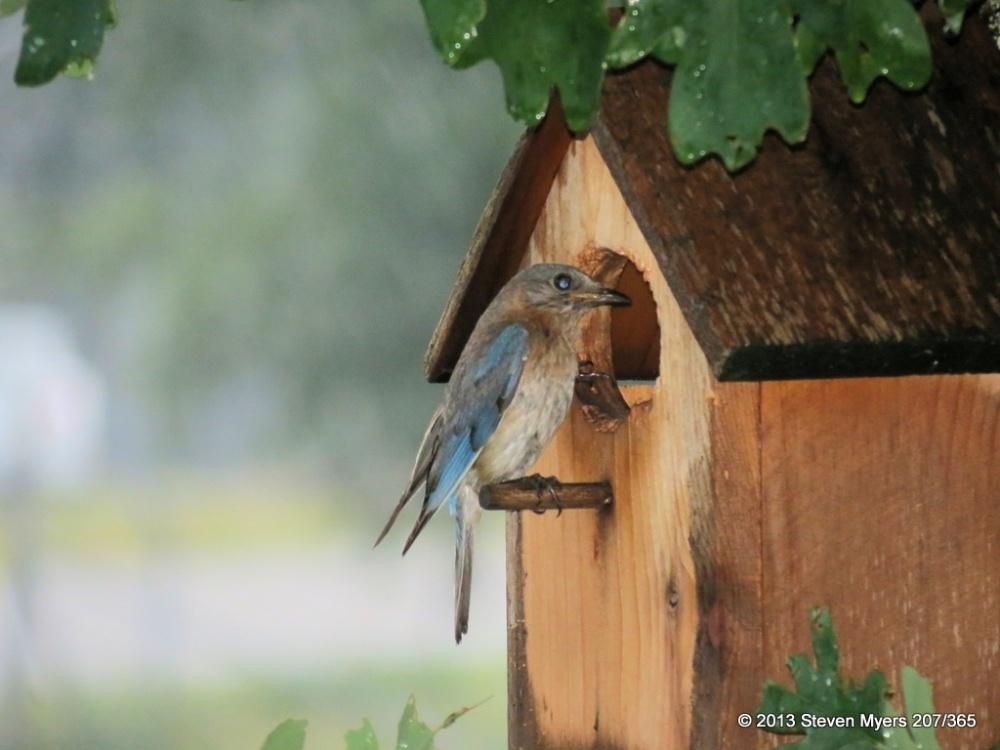 207/365 Bird Watching