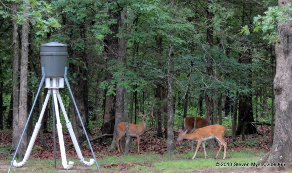 209/365 Deer Feeder Gang