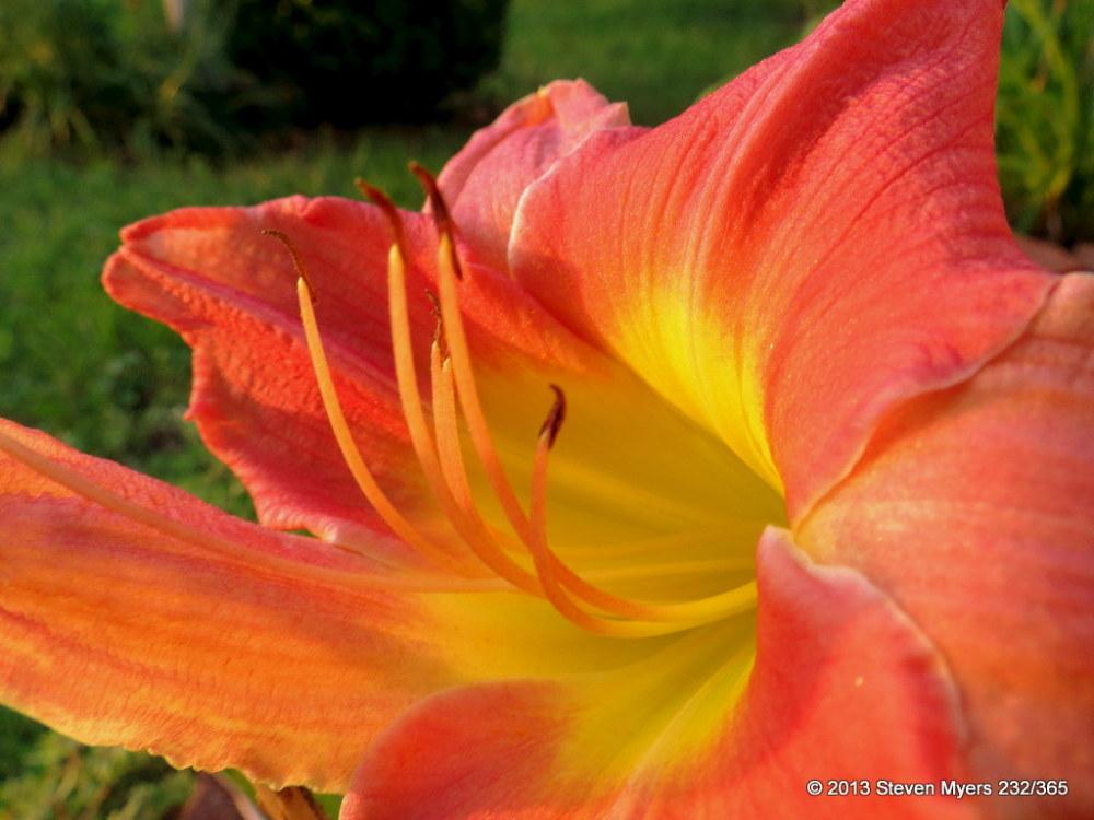 232/365 Flower