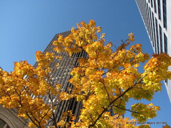 301/365 Urban Fall
