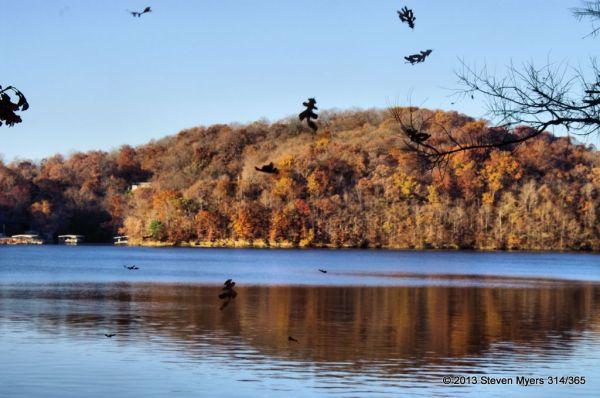314/365 Raining Leaves of Fall