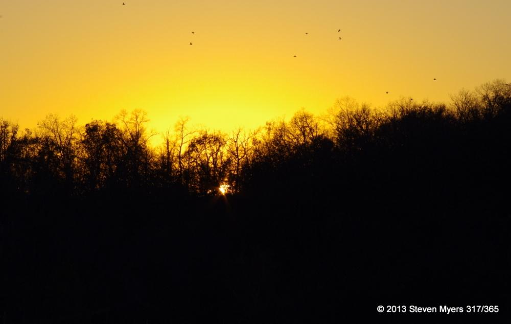 317/365 Flying in the Golden Sky
