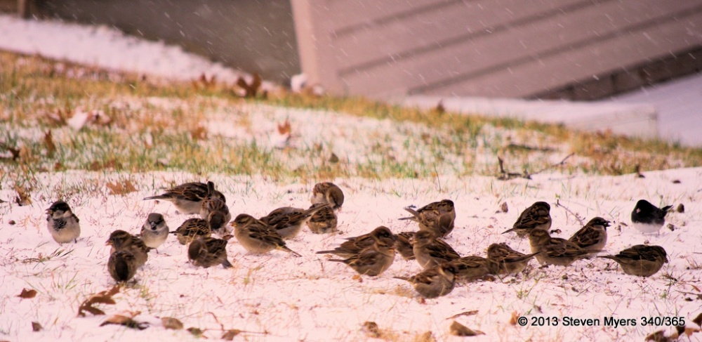 340/365 Feeding in the Snow