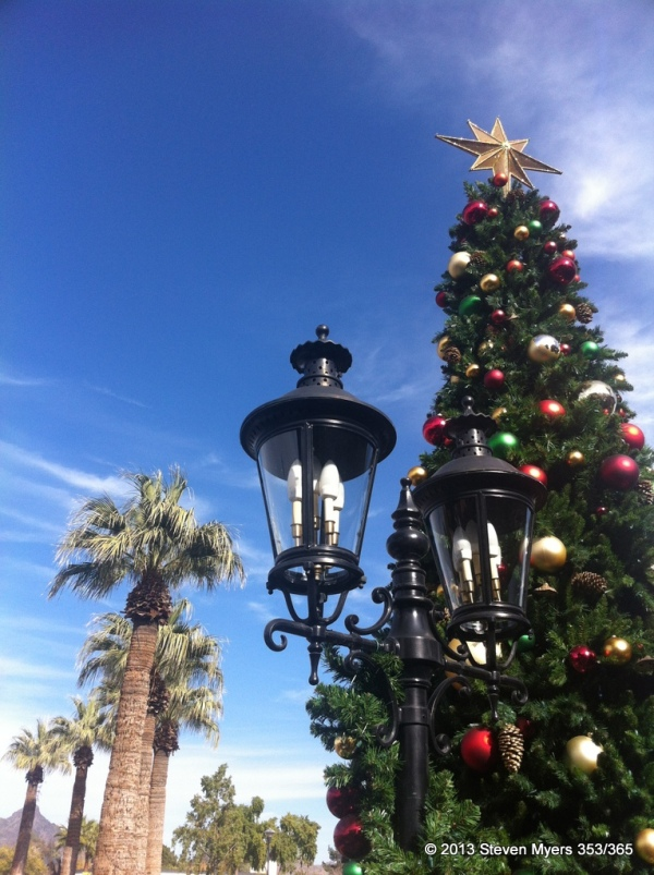353/365 Christmas Tree and Palms