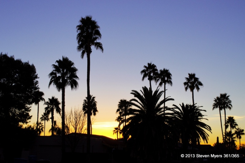 361/365 Palms in Sunset