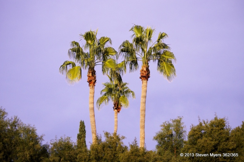 362/365 3 Palms in Arizona