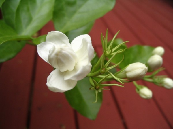 Bloom and Bud