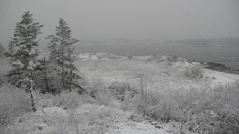 Black & White Snow Storm