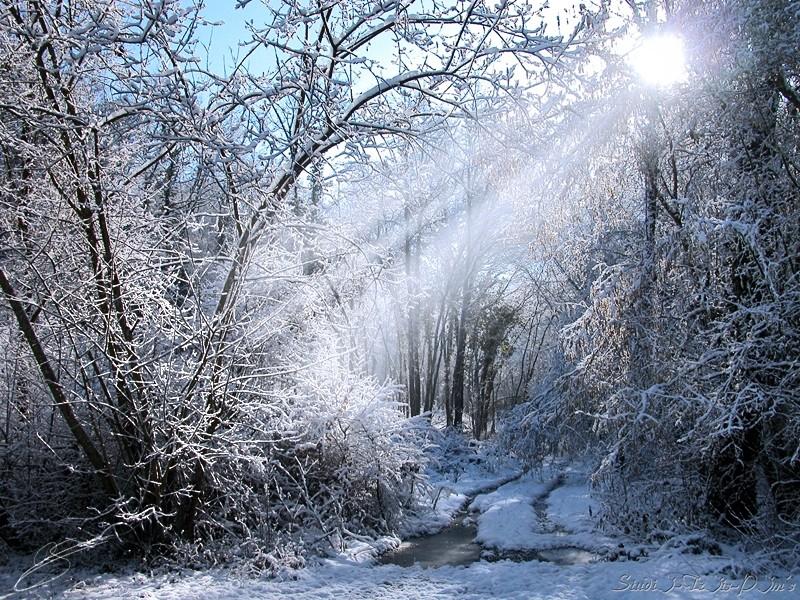Lumière froide pour froide lumière