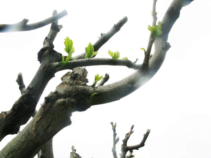Green dreamS...