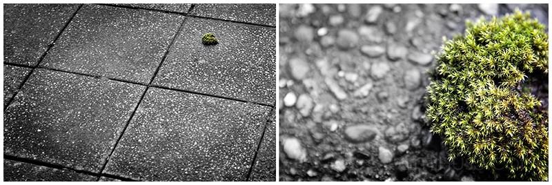 moss on the ground