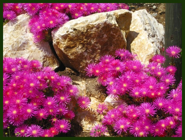 FLOWERS ON THE ROCK