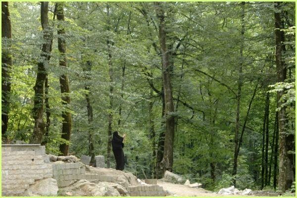 NAMAK ABRUD FOREST