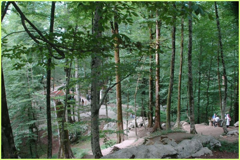NAMAK ABRUD FOREST-2