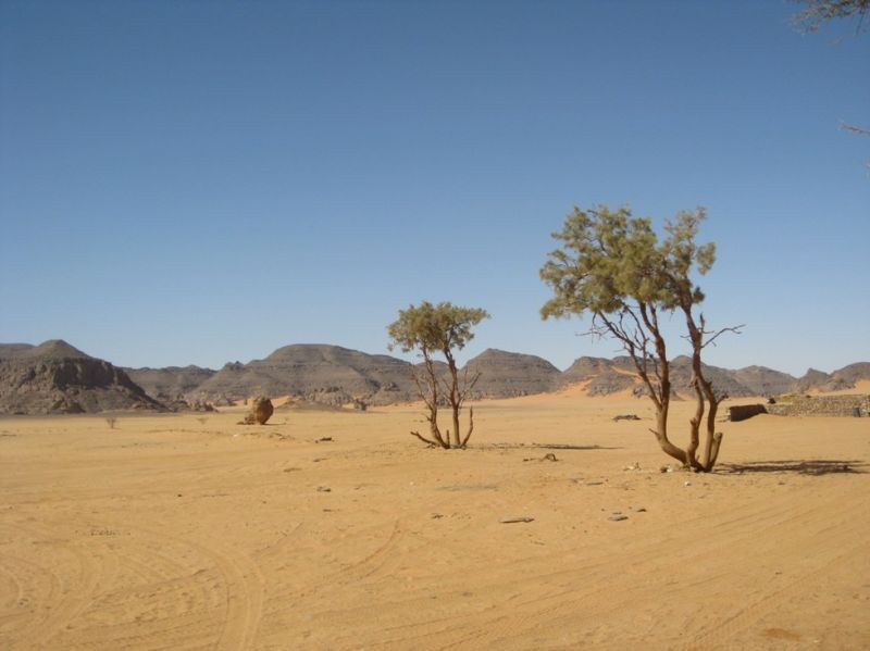 DESERT-THE LONELY TREE-3