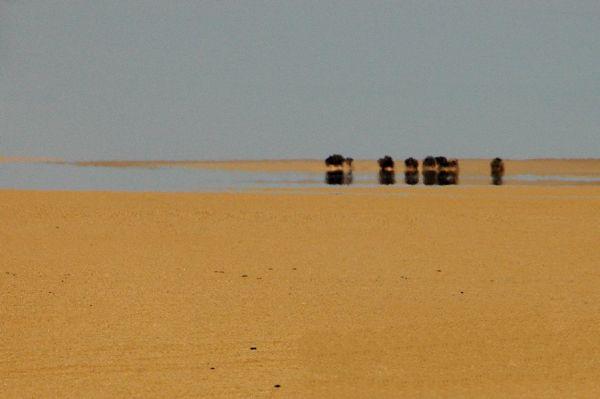 DESERT-MIRAGE-6