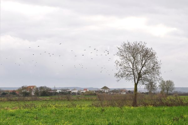 A WINTER LANSCAPE WITH  A FLOCK OF BIRDS