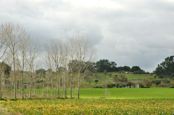 A GREEN WINTER LANDSCAPE