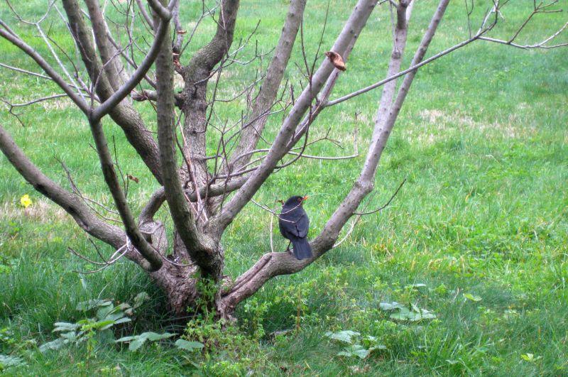 THE BIRD RESTING