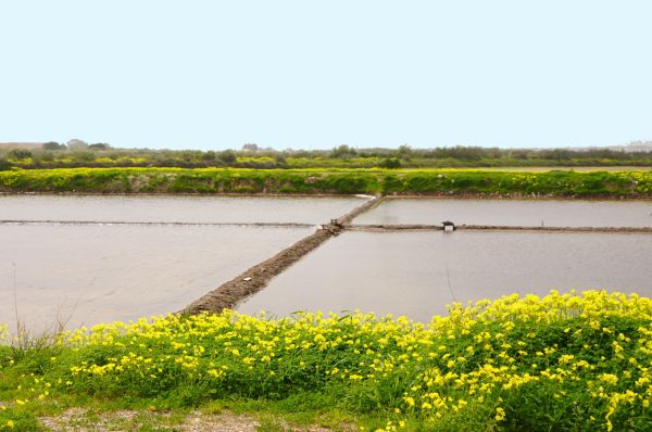 SALT EVAPORATION PONDS WITH FLOWERS 1/3