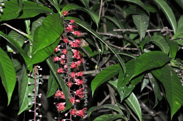 TAMAN NEGARA-A ONE NIGHT FLOWER