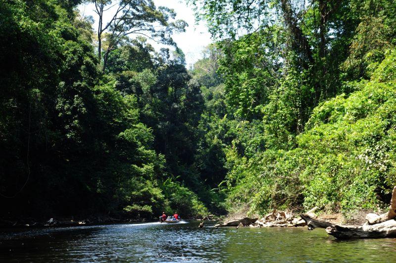 TAMAN NEGARA-A FOREST RIVER-1