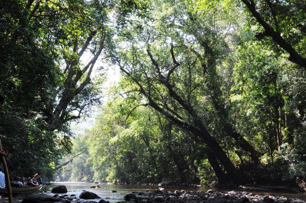 TAMAN NEGARA-A FOREST RIVER-4