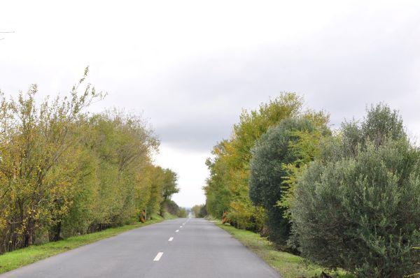 ALENTEJO, PORTUGAL-AN AUTUMN ROAD