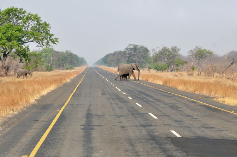 BOTSWANA- CROSSING THE ROAD