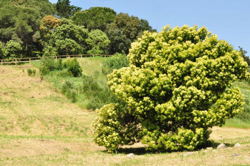 TREE LANDSCAPE-3