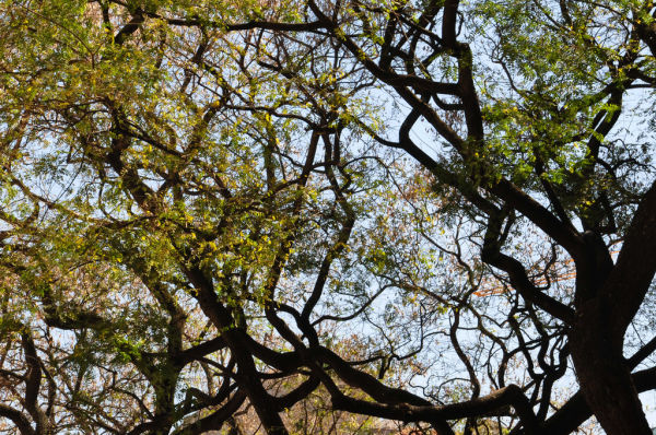 BRANCHES-2