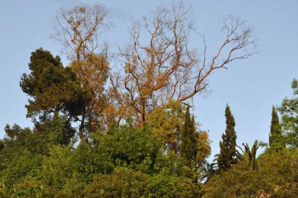 BRANCHES-3