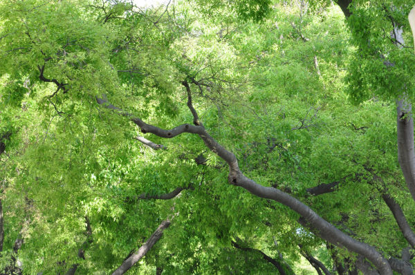 BRANCHES-6