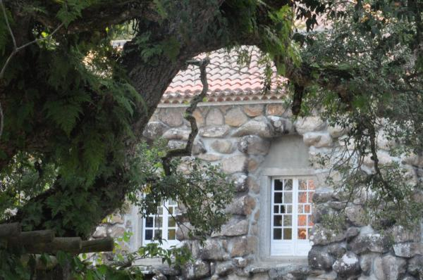THE OLD WINDOWS
