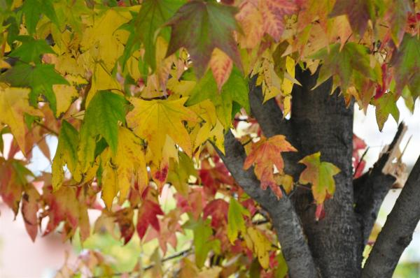 THE UNITED COLORS OF AUTUMN-1