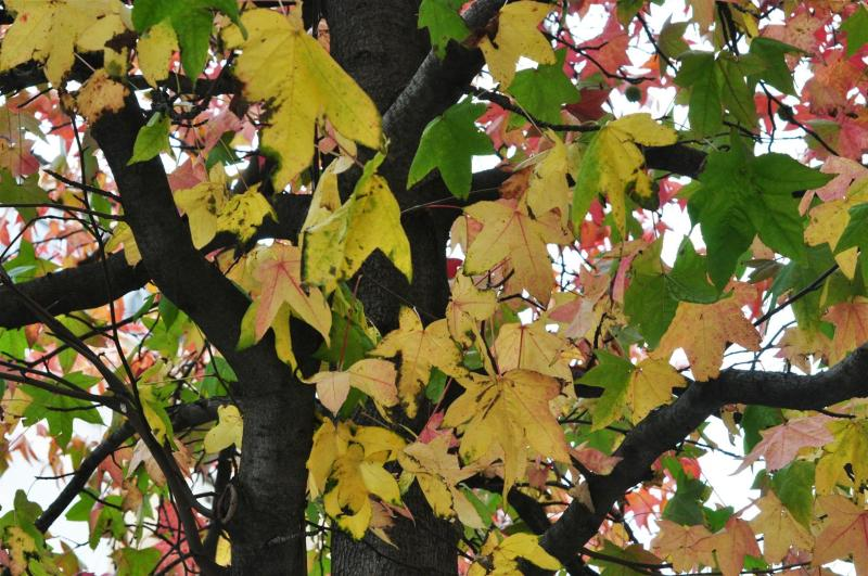 THE UNITED COLORS OF AUTUMN-2