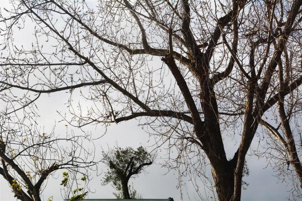 NAKED TREES-1