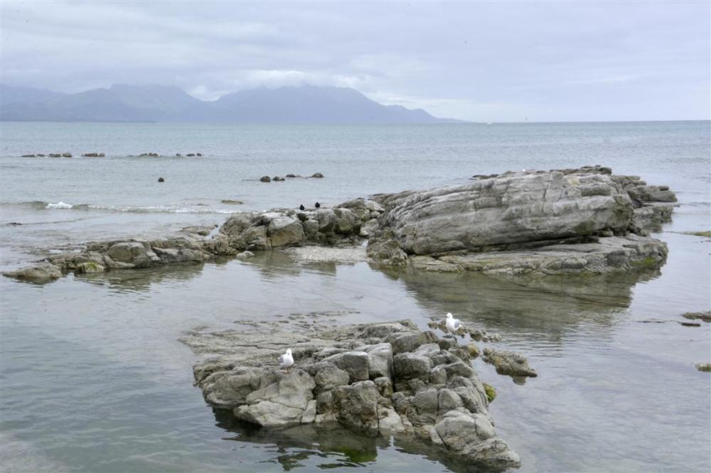 SEAGULLS ANS FUR SEALS IN KAIKOURA-3