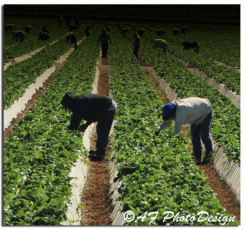 Field Workers