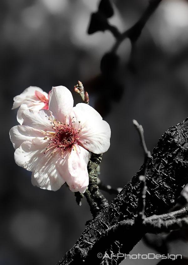 Spring Peek