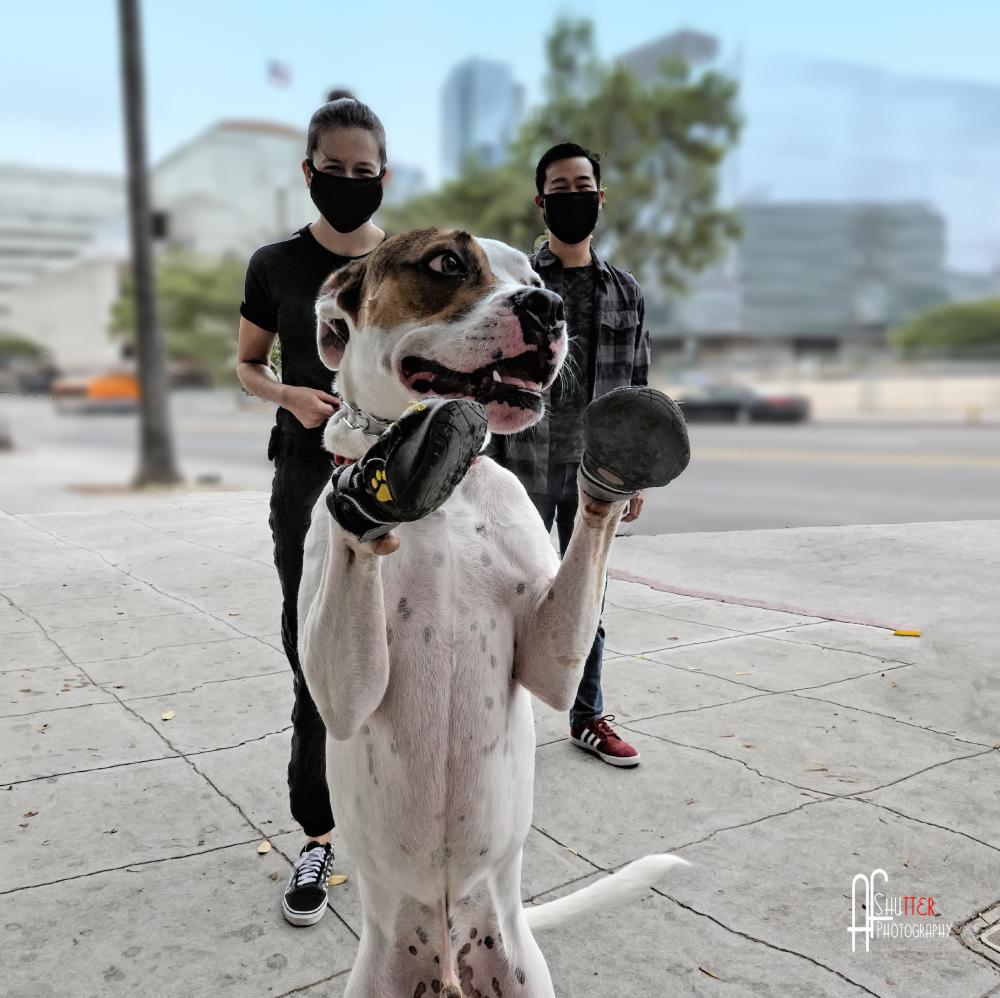 Dougie Da Dawg