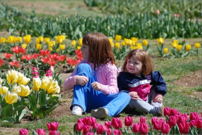 Among tulips