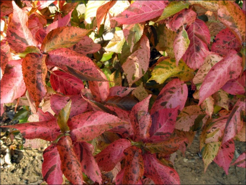 Red, Leaves, Plants, Colors,