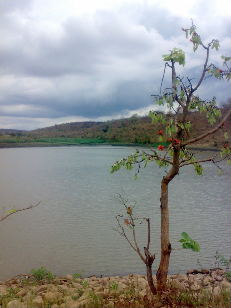 Water, River, Peace, Vine, India, Plants, Solace