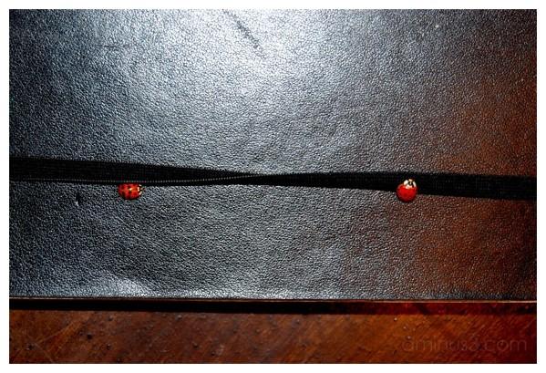 sleeping ladybugs on my diary