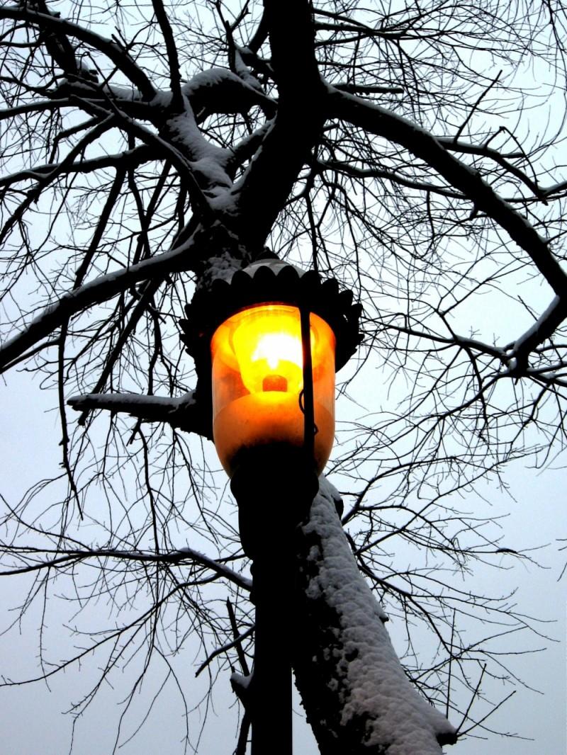 Winter Sentinel 1