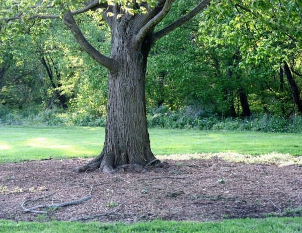 tree cherokeepark