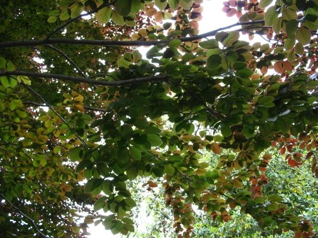 Light Through the Leaves 2
