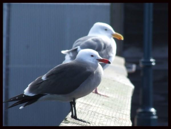 San Fran Birds!