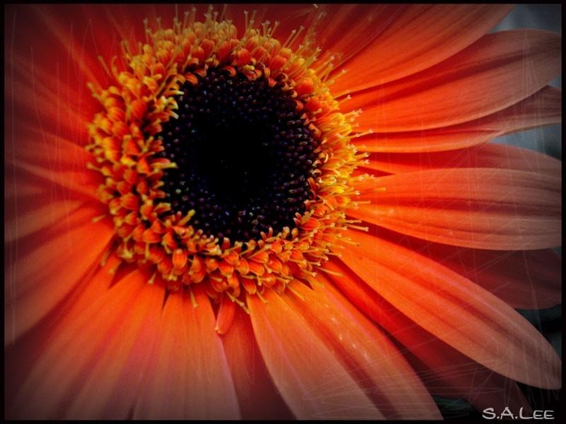 A Photoshop'ed flower art
